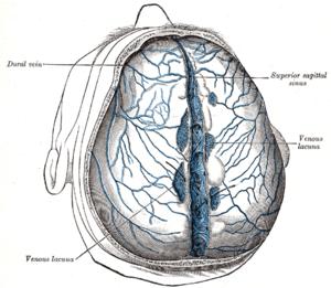 az epidurális tér visszér