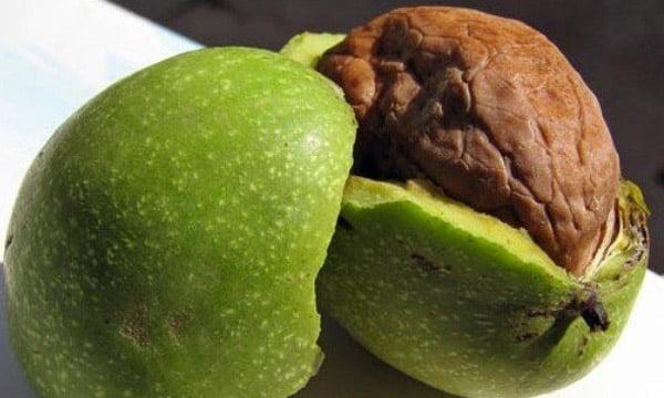 Tinktúra zöld dió vodkán prosztatagyulladásból