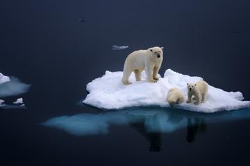 jégtakaró visszerek