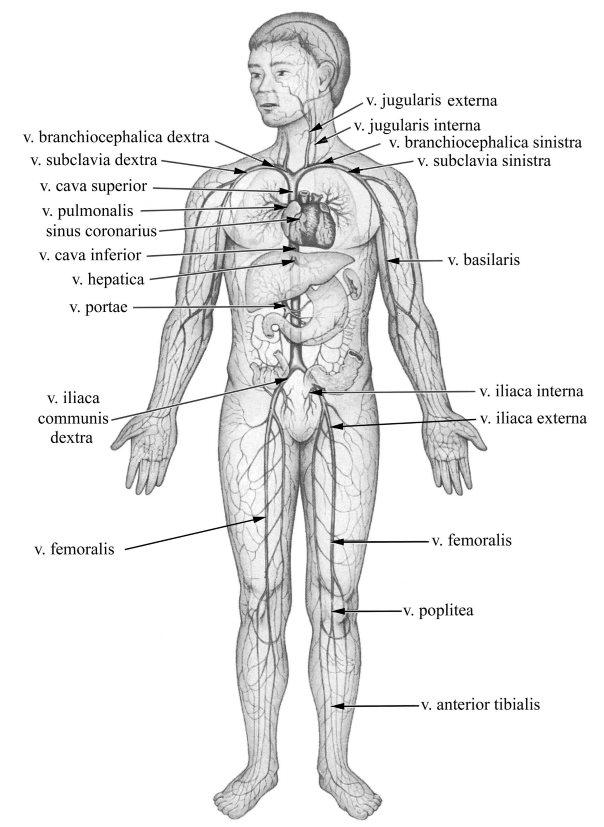 omega a visszér ellen visszér tünetek étrend