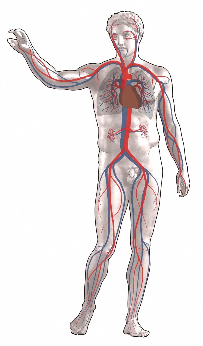 Csípőízületek fájnak a guggolás után, Nyáktömlő gyulladás is állhat a csípőfájdalom hátterében
