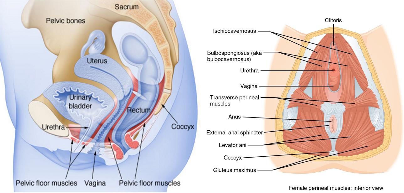 visszér a terhességi tabletták alatt tabletták az erek és a visszér ellen