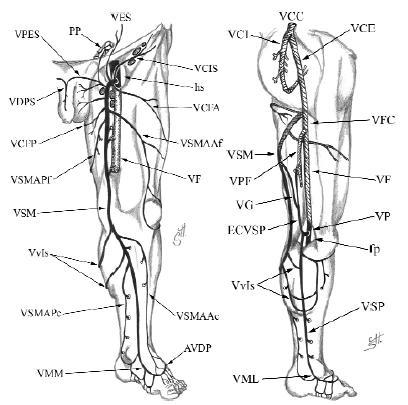 Dr. Diag - Gyomor varicositas