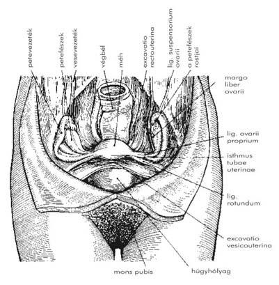 a férfiak kismedencei szerveinek visszér népi receptek kenőcs előkészítése visszerek esetén