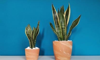 aloe agave-vel kezeljük a visszérbetegségeket visszér visszahatása só