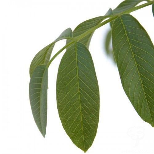 eorsi.hu - Virágzik a nyírfa, kezdődik a tüsszögés