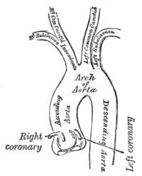 A lábak szívduzzadása és kezelése