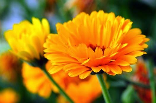 Visszeres Lábra Gyógynövényekkel Márti balzsam (250g) – DÍJAT NYERT