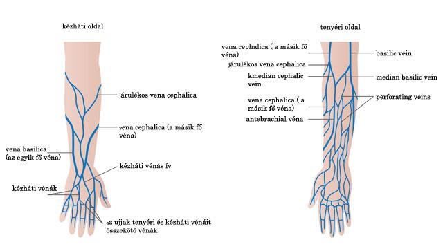 Erek, vénák ultrahangos diagnózisa